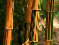 Паркет из бамбука
