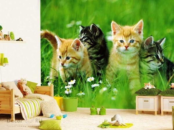 фотообои котята