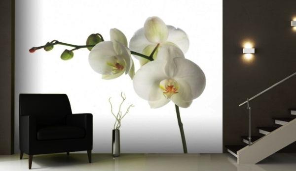 фотообои орхидеи белые