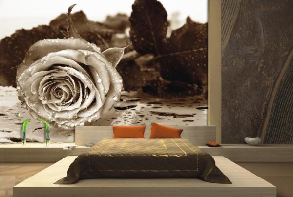 фотообои розы фото 4